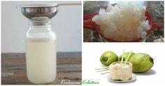 Il kefir d'acqua di cocco è un'incredibile bevanda ricca di fermenti lattici e probiotici, con tantissime vitamine, minerali ed elettroliti.