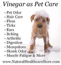 How to use vinegar for all natural pet care?  For more information http://www.naturalhealthcarestore.com/research_vinegar.htm   Vinegar for Disease Prevention, Healthcare & Household Cleaning Uses for Apple Cider & Other Vinegars