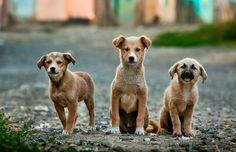 Hayvanları KoruyaMAyan 5199 Sayılı Kanundan Lehimize Çevirebileceğimiz 7 Madde