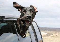 10 of the Greatest Things That Can Happen When You're Driving: 'When you catch a look of your dogs face in your mirror. Happiness!' #lol #spon