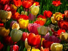 Flowers for you today sweetie : )