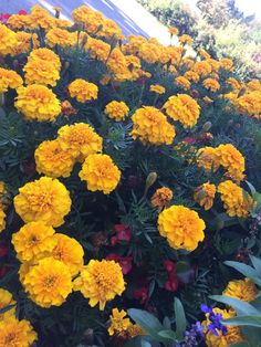 Imagen de plants, flower, and yellow