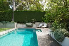 "The pool area is ""relaxed, contemporary and inviting"", says Peter. The tall hedge is *Cupressocyparis Leylandii* 'Leightons Green'. *Helichrysum petiolare* spills over the wall. The decking is unstained spotted gum."