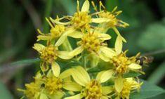 Użyj tego leku i zapomnij o wszystkich chorobach przez co najmniej 5 lat! Plants, Plant, Planets