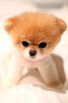 Boo Cute And Adorable Sad Fluffy Awesome