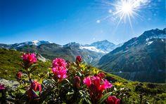"""Landliebe >>> Ringiers Zeitschrift,  """"genau im Trend: Zurück zu Natur, zurück zu Schweizer Werten und zu den Leuten, die im Stillen Gutes tun für unser Land."""" Mountains, Nature, Travel, Do Good, Agriculture, Breast Feeding, Swiss Guard, Magazines, Naturaleza"""