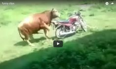 Two funniest video clips ever #compartirvideos.es #funnyvideos