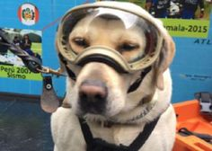 Frida, la perra veterana de la Marina, ha encontrado a 56 personas en misiones de rescate