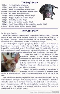 Dog's Diary vs Cat's Diary