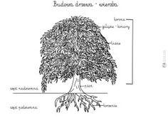 budowa drzewa - szablon