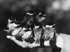 Song Birds as Neighbors- 1920 https://fernirosso.wordpress.com/2014/06/08/quando-lamore-apriva-le-dita/
