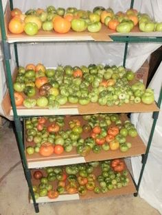 How to Ripen Green Tomatoes in Your Basement