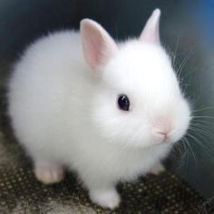 Completely adorable baby white bunny rabbit!