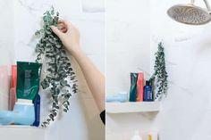 suspendez de l'eucalyptus dans la salle de bain