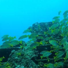 Cozumel Scuba Diving, Best Snorkeling, Scuba Diving Gear, Cave Diving, Maui Hawaii, Oahu, Flora Marina, Ocean Video, Maui Vacation
