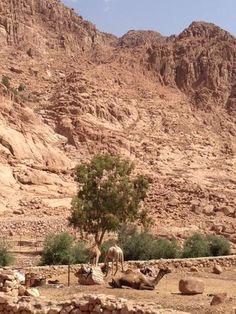 #Sinai #Dahab #Nuweiba #Egypt