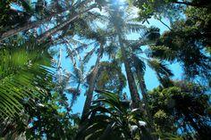 Rainforest walk, Gold Coast NSW