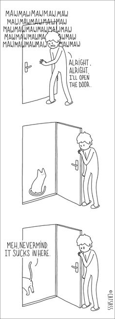 What Your Cat Really Thinks