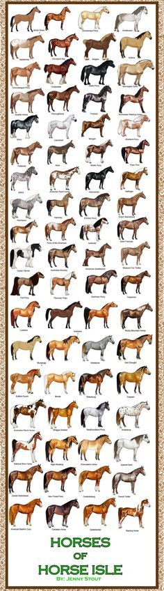 Breed Chart: Horseisle 1-69 by ~eponagirl on deviantART. Never knew there were that many breeds
