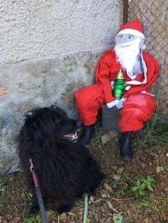 Don't I look cute! Grinch, Christmas Time, Selfies, Santa, Superhero, Cute, Fictional Characters, Kawaii, Fantasy Characters