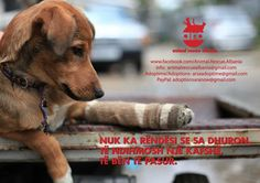 It doesn't matter how much you give. Helping an animal in need makes you rich. #animalrescuealbania #hope4paws