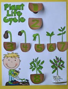 All information about Plant Life Cycle For Preschool. Pictures of Plant Life Cycle For Preschool and many more. Plant Science, Kindergarten Science, Science Experiments Kids, Science For Kids, Garden Crafts For Kids, Fun Crafts For Kids, Kids Fun, Garden Ideas, Free Preschool