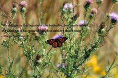 Monarch at Cedar Bog Nature Preserve