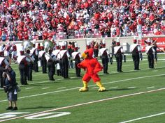 """University of Louisville Cardinals. The Cardinal Bird is nicknamed """"Louie"""" in some circles. This is in homage its school name and city name, both, as they are sometimes pronounced as """"Louie-ville."""" Others choose abbreviate his name, nicknaming him """"C.B."""" His costume weighs over 50 pounds."""