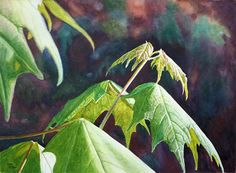 Leaves Art Watercolor Painting Print by Cathy Hillegas, New Maples. maple leaves, green, yellow, orange, purple, blue, brown