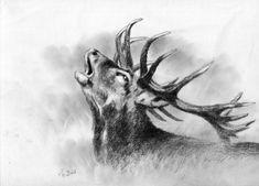 Z Röhrender Hirsch – Jagdmaler Thomas Bold Deer Wallpaper, Animal Wallpaper, Deer Art, Moose Art, Deer Sketch, Hirsch Tattoo, Natur Tattoos, Deer Drawing, Deer Pictures