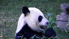 Shared Solutions - What to do with a Zoo's bamboo?