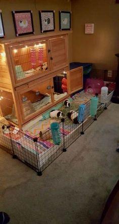 58+ trendy ideas for pet bunny diy cage guinea pigs #diy #pet