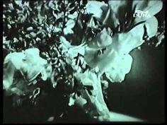 Kétszer kettő - teljes film Akita, Youtube, Youtubers, Youtube Movies