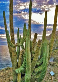 Have A Baja Moment at Tabor Canyon: Hiking the Mountains of Loreto.