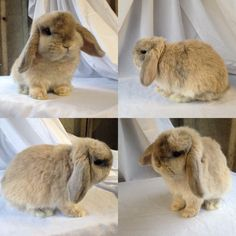 Can't believe I'm having to write this but some utter scumbags have broken into my friends shed and stolen 11 rabbits (4 of mine and 7 of hers). These rabbits mean the world to us and we want them back! I have attached pictures of them and if anyone sees them advertised anywhere or knowsRead More