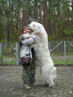 The Caucasian Mountain Dog is one of the largest dog breeds that you can ever find. There are more than 10 names that are used for referring to this dog Huge Dogs, Giant Dogs, I Love Dogs, Huge Dog Breeds, Small Dogs, Animals And Pets, Funny Animals, Cute Animals, Le Plus Grand Chien