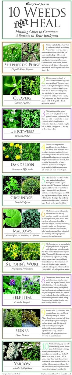 Gardening Love 10 Weeds That Heal Flowers Garden Love - Medicinal plants are crucial to your health and wellness in a survival situation. Get to know the 11 medicinal plants you can grow in your backyard! Healing Herbs, Medicinal Plants, Poisonous Plants, Survival Life, Survival Skills, Camping Survival, Emergency Preparedness, Survival Stuff, Wilderness Survival