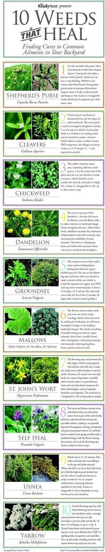 10 Weeds That Heal Flowers Garden Love
