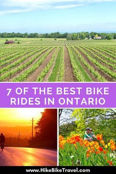Need some bike ride inspiration? Here are 7 winning bike rides ranging in length from a day to a week covering primarily southern Ontario, Mountain Bike Shoes, Mountain Bicycle, Mountain Biking, Bike Rides, Bike Run, Fixed Bike, Fixed Gear, Buy Bike, Bicycle Maintenance