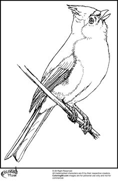 Tufted Titmouse Coloring Page From Category Select 24659 Printable Crafts Of Cartoons Nature Animals Bible And Many More