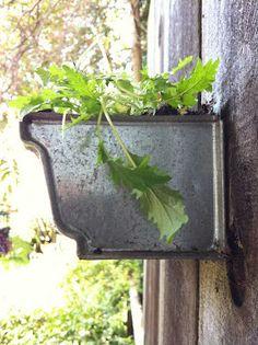 corner blog: how to build a gutter garden