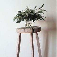 Sprouted eucalyptus- I am using these leaves for table runners as well