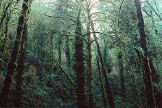 joslo: forest park by Saria Dy Via Flickr