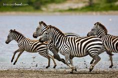Exploring Africa: A Tanzanian Camping Safari Adventure #Travel #Safari