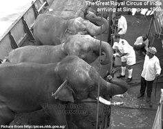 The Great Royal Circus of India arriving at Singapore in 1968. (More details here: http://bit.ly/GElaqE)