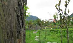 IMG_4901 South Tyrol, Mountains, Nature, Plants, Travel, Naturaleza, Viajes, Destinations, Plant