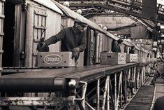 Kajplats 102 i Frihamnen. Bananer lossas med hjälp av riggade bandtransportörer från fartygets lastrum. Bananerna ska transporteras vidare ut i landet med tåg.