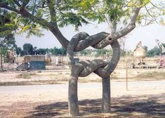 strange trees | Look At This...: Strange, Weird, Odd and Unique Trees