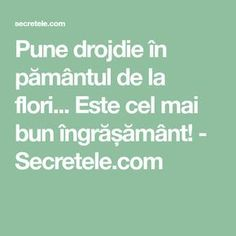 Pune drojdie în pământul de la flori... Este cel mai bun îngrășământ! - Secretele.com Cross Stitch Charts, How To Get Rid, Vegetable Garden, Good To Know, Diy And Crafts, Health Fitness, Flowers, Mai, Gardening