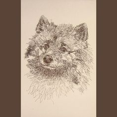 keeshond dog art portrait drawing from words your dogs name added into art free great gift signed kline 11x17 lithograph 42500